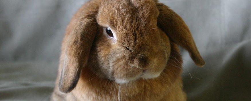 Aaaaeroincus Ravishing Free Resume Templates Excel Pdf Formats  Resume Rabbit Cost
